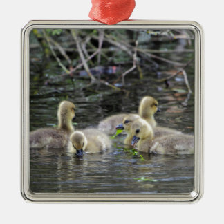 Greylag geese goslings with plants on a lake. Silver-Colored square decoration
