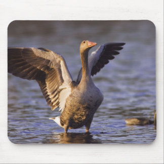 Greylag Goose, Anser anser, adult with young, Mouse Pad