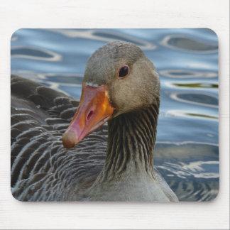 Greylag Goose, Anser anser, Graugans Mouse Pad