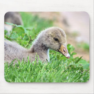 Greylag Goose Gosling Mousepad