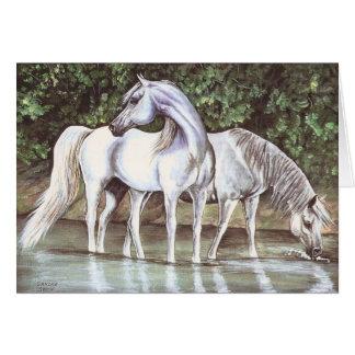 Greys in stream card
