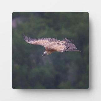 Griffon vulture, France Plaque