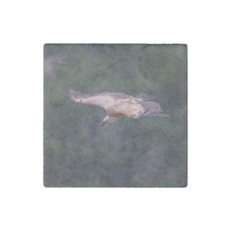 Griffon vulture, France Stone Magnet