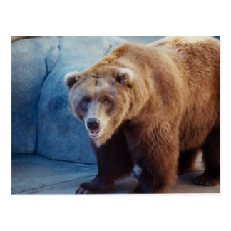 Grizzly Bear 1 Postcard