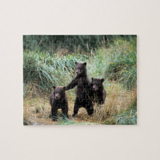 Grizzly bear, brown bear,  cubs in tall grasses, jigsaw puzzle