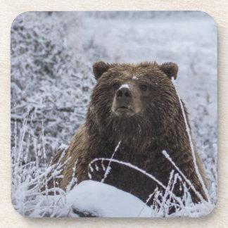 Grizzly Bear Coaster set