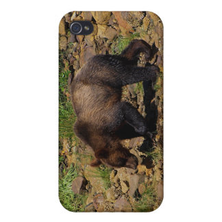 Grizzly Bear Cub Wildlife iPhone Case iPhone 4/4S Cover