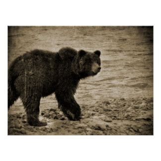 Grizzly Bear in Antique Poster