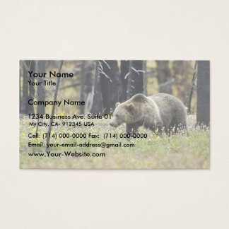 Grizzly Bear in Field at Yellowstone National Park Business Card