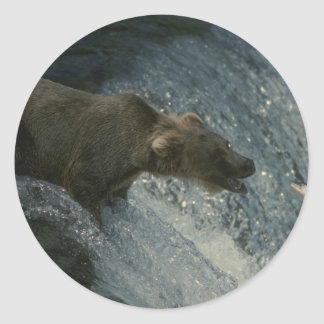 Grizzly Bear  Picture-Fishing for Salmon Round Sticker