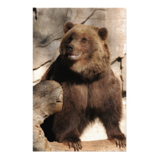 Grizzly Bear Sow Stationery Paper