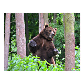 Grizzly Bear Standing Tall In The Woods Postcard