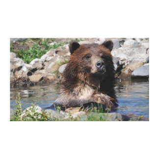 Grizzly Bear Stretched Canvas Stretched Canvas Print