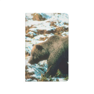 Grizzly Bear Winter Wildlife Nature Photo Journal