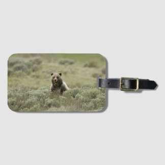 Grizzly Details Luggage Tag
