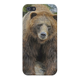 Grizzly Head On iPhone 5 Case