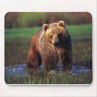 GRIZZLY IN WATER MOUSEPAD