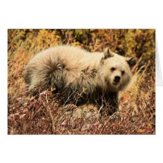 Grizzly Junior Card
