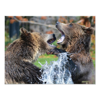 Grizzly Photo Print