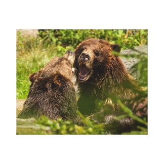 Grizzy Bears Play Fighting Stretched Canvas Print