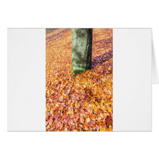 Ground around tree trunk covered with autumn leave card