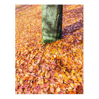 Ground around tree trunk covered with autumn leave postcard