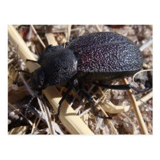 Ground Beetle Postcard
