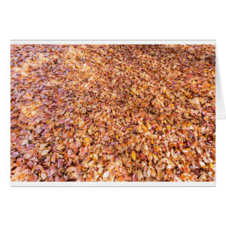 Ground covered with beech tree leaves in autumn card