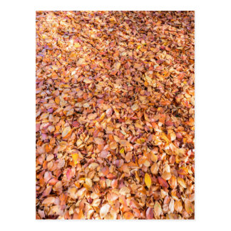 Ground covered with beech tree leaves in autumn postcard
