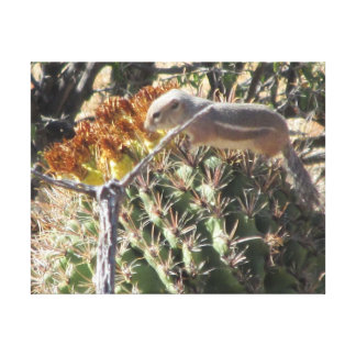 Ground Squirrel on Barrel Cactus Gallery Wrapped Canvas