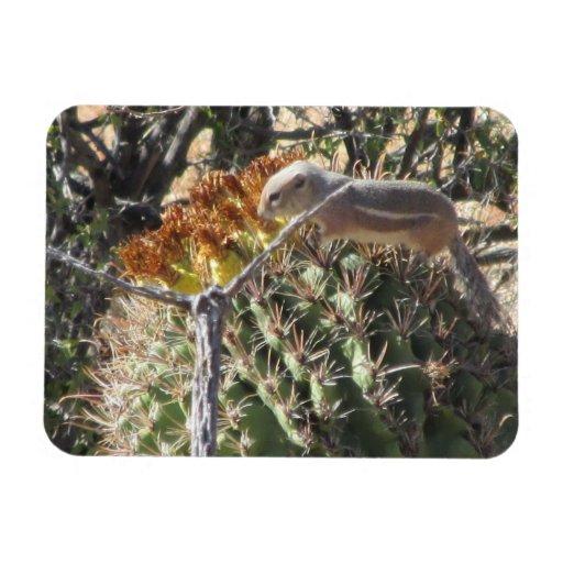 Ground Squirrel on Barrel Cactus Magnet