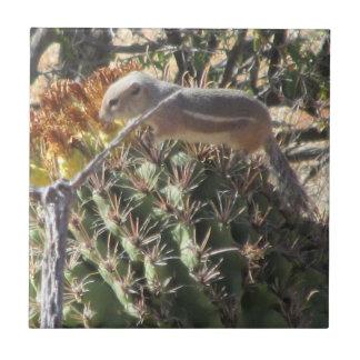 Ground Squirrel on Barrel Cactus Ceramic Tiles