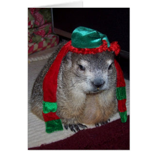 Groundhog Christmas Card