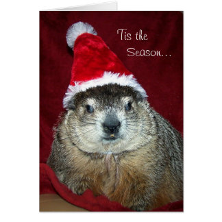 Groundhog Clara Holiday Greeting Card