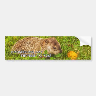 Groundhog Day tidings to you! bumper sticker