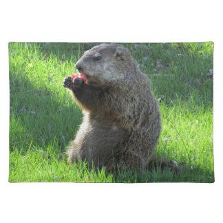 Groundhog eating placemat