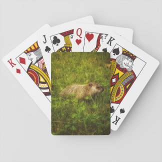 Groundhog in a field playing cards