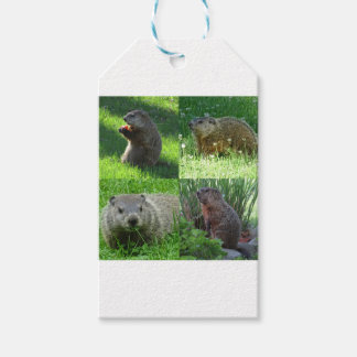 Groundhog Medley Gift Tags