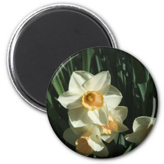 group1 054 Narcissus 6 Cm Round Magnet