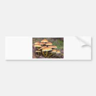 Group brown mushrooms in fall forest bumper sticker