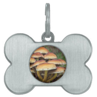 Group brown mushrooms in fall forest pet tag