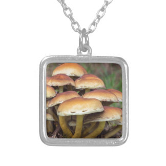 Group brown mushrooms in fall forest silver plated necklace