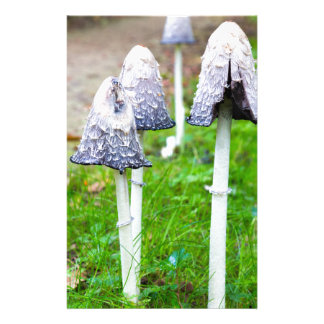 Group ink mushrooms near forest path in fall custom stationery