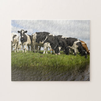 Group of Friesian cows Jigsaw Puzzle
