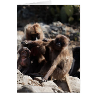 Group of gelada baboons (Theropithecus gelada) Card