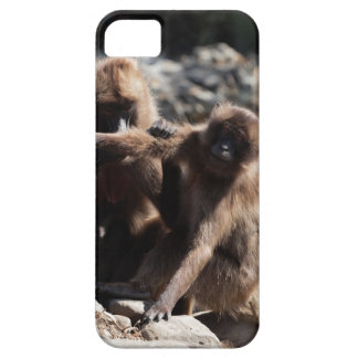 Group of gelada baboons (Theropithecus gelada) Case For The iPhone 5
