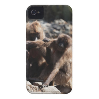 Group of gelada baboons (Theropithecus gelada) iPhone 4 Case