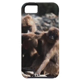 Group of gelada baboons (Theropithecus gelada) iPhone 5 Case