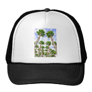 Group of high straight palm trees cap