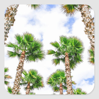 Group of high straight palm trees square sticker